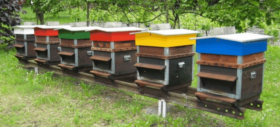 Formation apiculture, abeille, ruche
