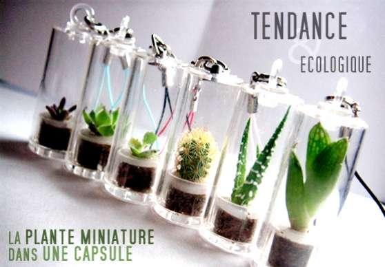 Vente de mini cactus en porte cl jardin nature fleurs for Mini plantes vertes pas cher