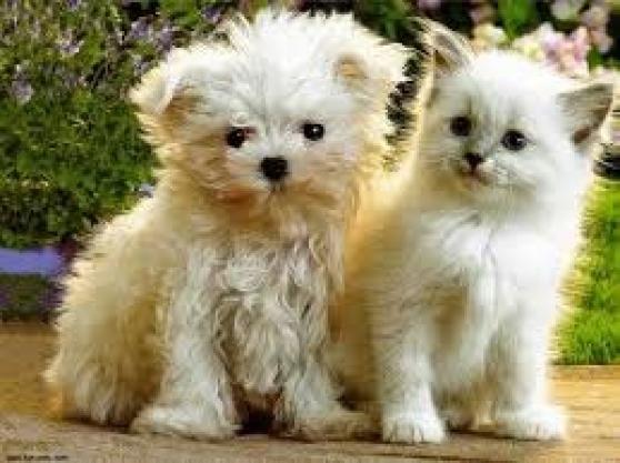 Annonce occasion, vente ou achat 'Gardiennage petit chien ou chat'