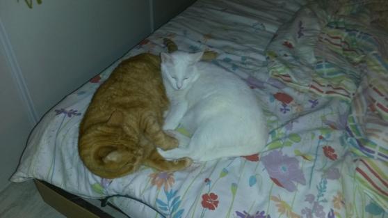 garde de chats