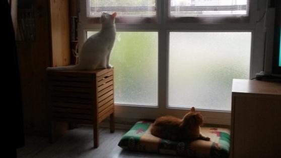garde de chats - Photo 2