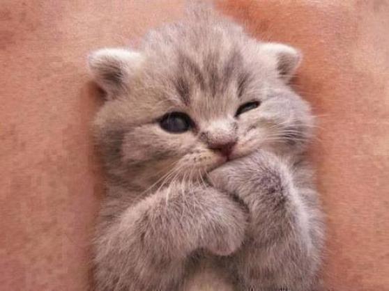 chaton à adopter - Annonce gratuite marche.fr