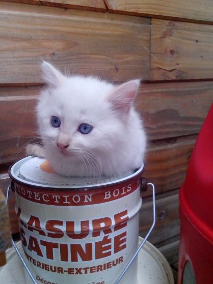 donne jolis chatons contre participation