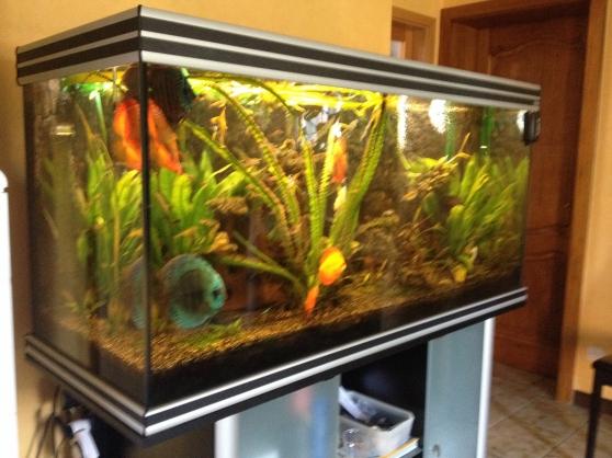 Aquarium 660 litres, materiels,discus