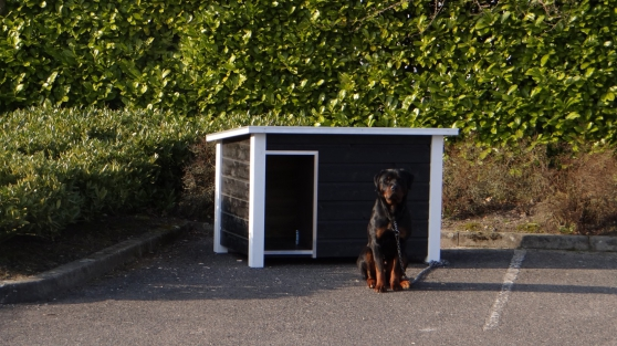 Niches pour chien - Photo 4
