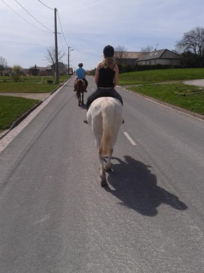 Annonce occasion, vente ou achat 'stagiaire equestre'