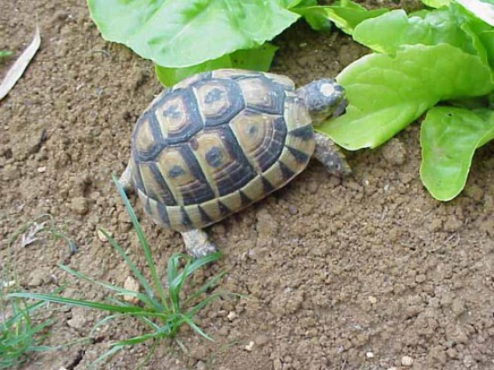 tortue de terre - Photo 1