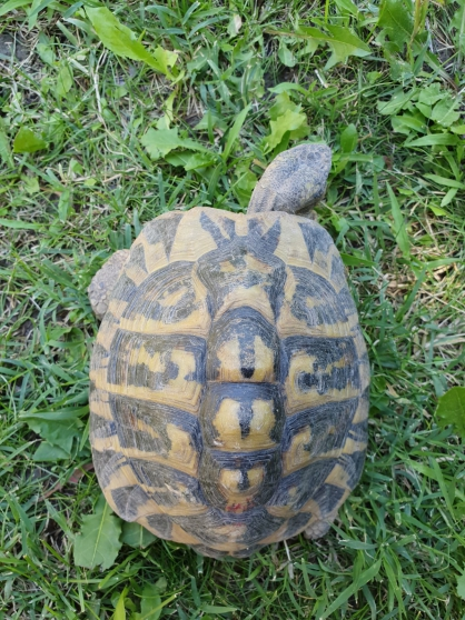 tortue de terre - Photo 3