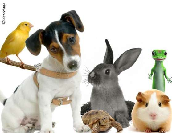 Garde d'animaux / Pet sitting