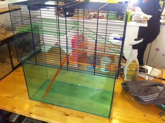 cage pour gerbille animaux cages toulon reference ani cag cag petite annonce gratuite. Black Bedroom Furniture Sets. Home Design Ideas