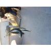 troc poisson frais du jour - Annonce gratuite marche.fr