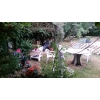 Campe dans mon jardin région de Melle