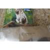 advantix grand chien (25-40 kg) - Annonce gratuite marche.fr