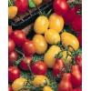 40 graines de tomate petit moineau - Annonce gratuite marche.fr