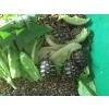 tortues juvenile - Annonce gratuite marche.fr