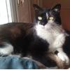 service de visites à domicile pour chats - Annonce gratuite marche.fr