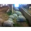 stage d'élevage pour cdc et autorisation - Annonce gratuite marche.fr