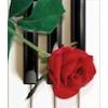 Piano numérique, le P45 de yamaha, neuf