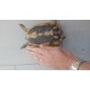 superbe femelle tortue reproductrice - Annonce gratuite marche.fr
