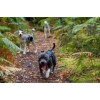 Promenade de chien - Professionnelle