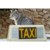 Taxi animalier - Professionnelle