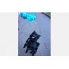 garde de vos animaux sur montpellier - Annonce gratuite marche.fr