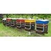 Formation apiculture, abeille, ruche