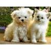 Gardiennage petit chien ou chat