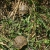 Petite Annonce : Tortues de terre nées dans mon jardin - Tortues de terre nées dans mon jardin en septembre 2018. Elles ont