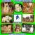 Petite Annonce : Plusieurs chiots disponibles de petites - DANS UN CADRE DE VERDURE ET DE VIE FAMILIALE,  eurl « DOG\'S CITY