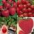 Petite Annonce : Plant de fraisier : le  jardin du lavoir - Le fraisier est une petite plante vivace qui nécessite peu