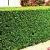 Petite Annonce : Troène verte (pot) - Troène verte  80/100cm  contacter nous par mail où téléphone